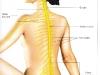 gangli-spinal