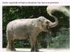 elefant_0